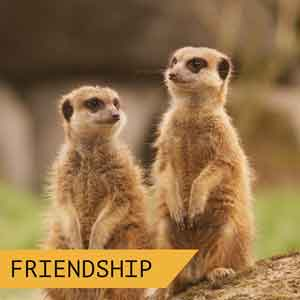 as-friendship-meerkats-300x300px